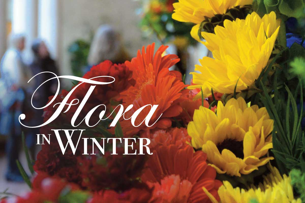 Flora in Winter