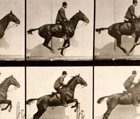 Detail of 'Jumping the Bay Saddle Horse, Daisy 				' by Eadweard Muybridge